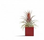 Soutěž o magnetický květináč v dárkovém balení - www.vanocni-darky.cz