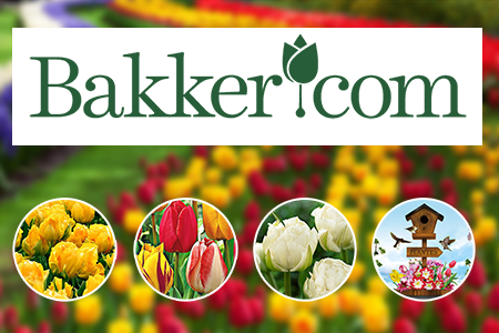 Tipn�te si s Bakkerem a vyhrajte to nejhez�� z holandsk�ch pl�n�! - www.bakker.com/cs-cz