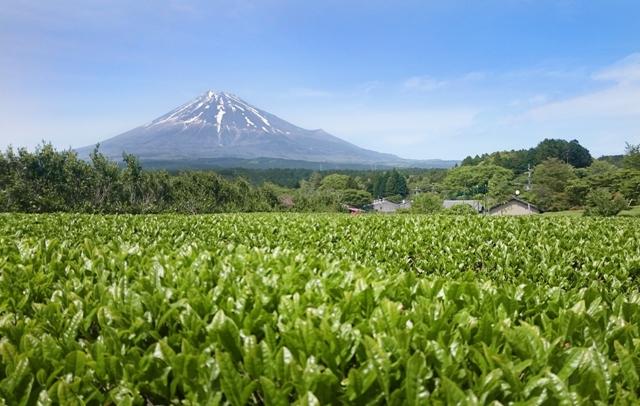 Letní soutěž s Matcha Tea. Vyhraj all inclusive zájezd do Japonska v hodnotě 69 000 Kč - www.matchatea.cz