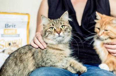 SOUTĚŽ: Brit Care Cat  Krmivo pro všechny kočičí osobnosti - www.zenyprozeny.cz