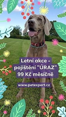 Soutěž o roční pojištění pro pejska či kočku od PetExpert - www.chytrazena.cz
