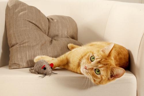 Tři  tipy, jak zajistit zdraví vaší sterilizované kočky